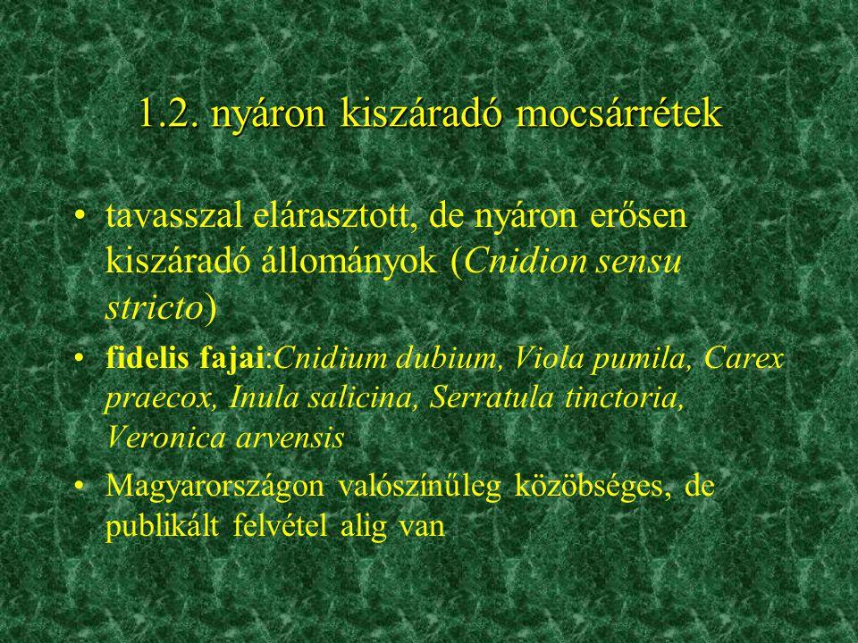 1.2. nyáron kiszáradó mocsárrétek •tavasszal elárasztott, de nyáron erősen kiszáradó állományok (Cnidion sensu stricto) •fidelis fajai:Cnidium dubium,
