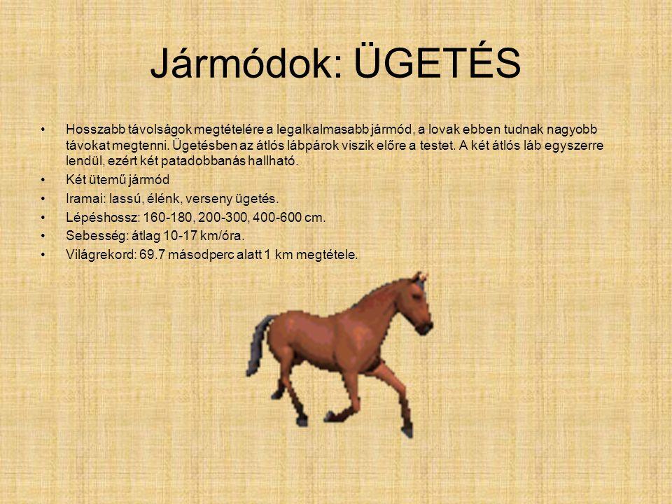 Jármódok: LÉPÉS •Ez a ló leglassúbb és leggyakrabban használt jármódja. A lépésben az egyes lábak egyenként, adott sorrendben érnek talajt, így négy p