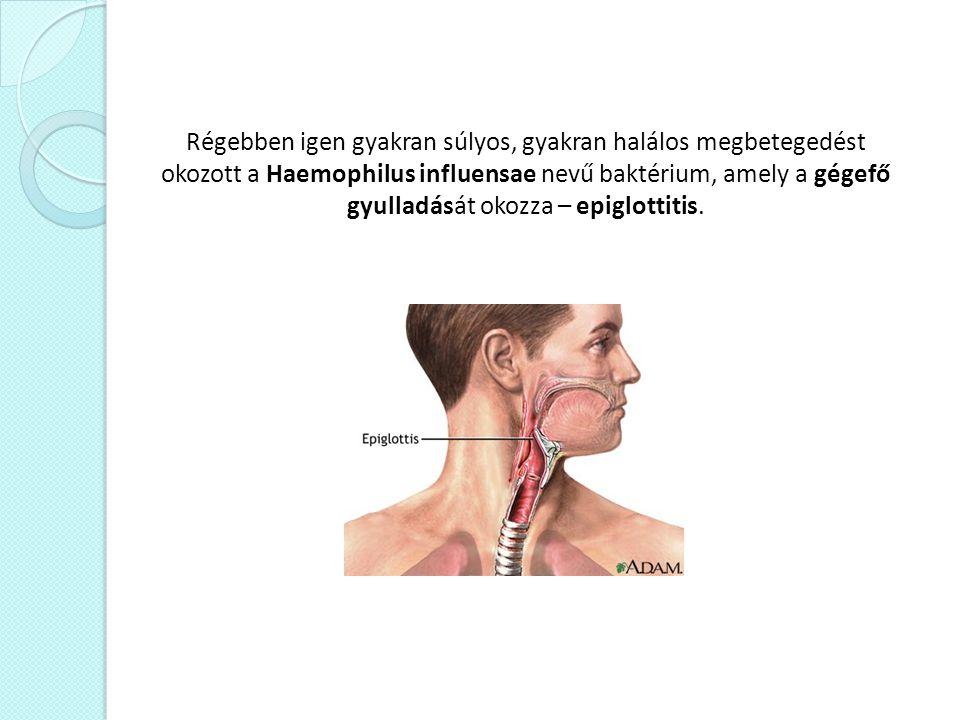 Régebben igen gyakran súlyos, gyakran halálos megbetegedést okozott a Haemophilus influensae nevű baktérium, amely a gégefő gyulladását okozza – epigl