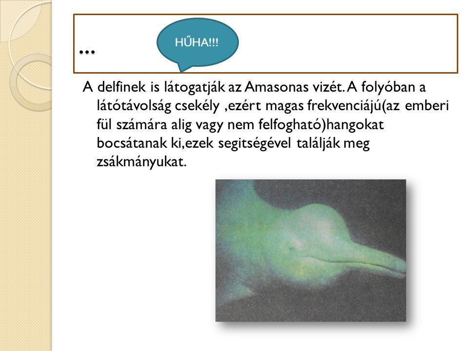 ... A delfinek is látogatják az Amasonas vizét. A folyóban a látótávolság csekély,ezért magas frekvenciájú(az emberi fül számára alig vagy nem felfogh