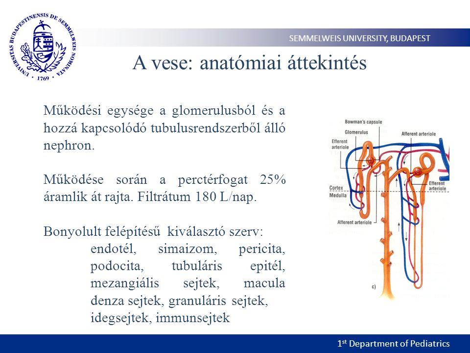 1 st Department of Pediatrics SEMMELWEIS UNIVERSITY, BUDAPEST A vese: funkcionális áttekintés Glomerulus: a vérplazmából ultrafiltrátum képződik 125ml/min Tubulus: tubulus hámsejtek aszimmetrikus szerkezete (Na-K pmpa) PTE: filtrált folyadék 70%, glukóz, aminosavak szívódnak vissza Henle kacs: koncentrált vizeletképzés DTE: Macula denza, mezangiális és granuláris sejt – renin Gyűjtőcsatorna: Na, víz, urea felszívódás és K valamint NH 4 szekréció