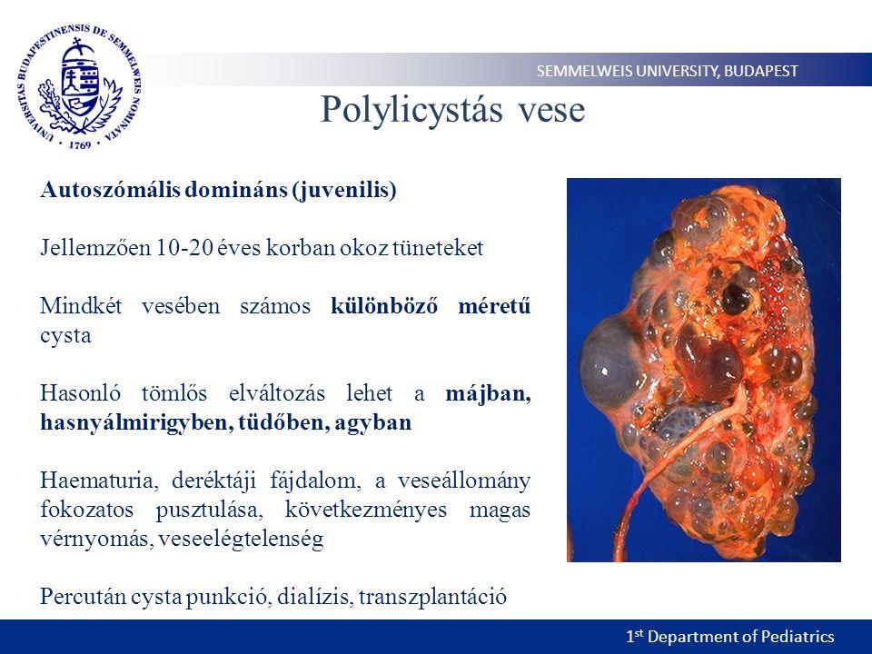 1 st Department of Pediatrics SEMMELWEIS UNIVERSITY, BUDAPEST Polylicystás vese Autoszómális domináns (juvenilis) Jellemzően 10-20 éves korban okoz tüneteket Mindkét vesében számos különböző méretű cysta Hasonló tömlős elváltozás lehet a májban, hasnyálmirigyben, tüdőben, agyban Haematuria, deréktáji fájdalom, a veseállomány fokozatos pusztulása, következményes magas vérnyomás, veseelégtelenség Percután cysta punkció, dialízis, transzplantáció