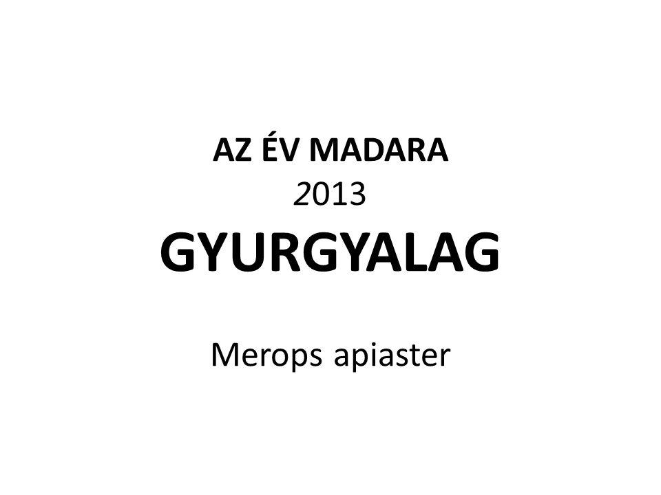 AZ ÉV MADARA 2013 GYURGYALAG Merops apiaster