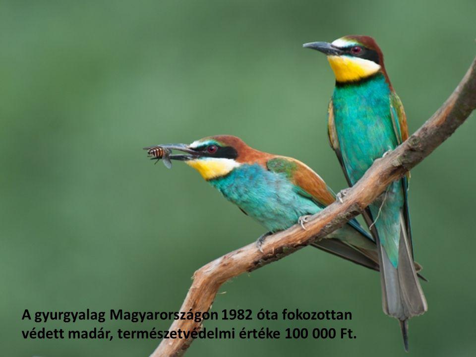 A gyurgyalag Magyarországon 1982 óta fokozottan védett madár, természetvédelmi értéke 100 000 Ft.