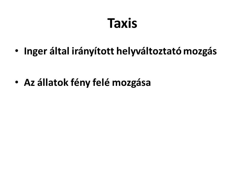 Taxis • Inger által irányított helyváltoztató mozgás • Az állatok fény felé mozgása