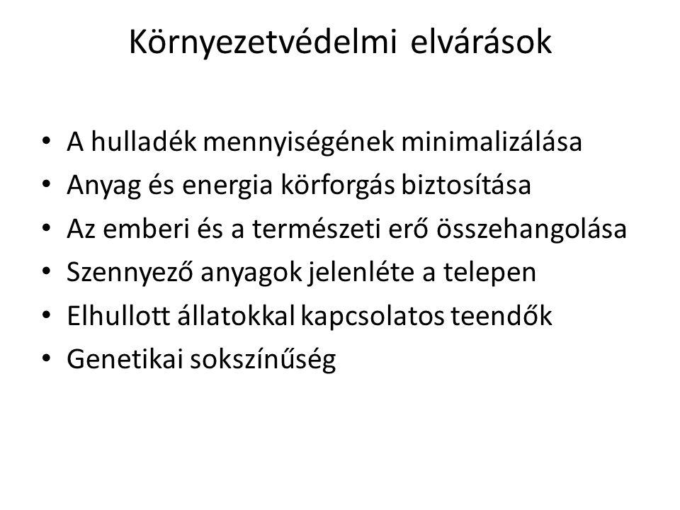Fehér magyar tyúk