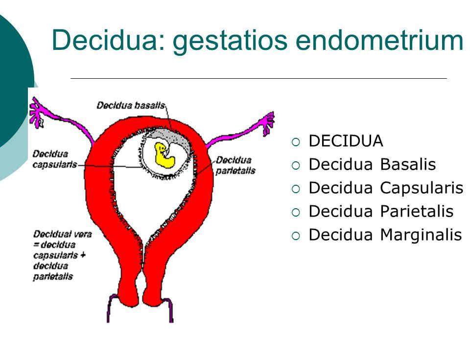 Decidua: gestatios endometrium  DECIDUA  Decidua Basalis  Decidua Capsularis  Decidua Parietalis  Decidua Marginalis
