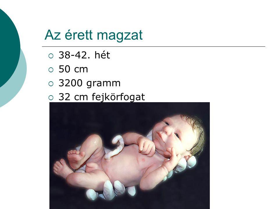 Az érett magzat  38-42. hét  50 cm  3200 gramm  32 cm fejkörfogat