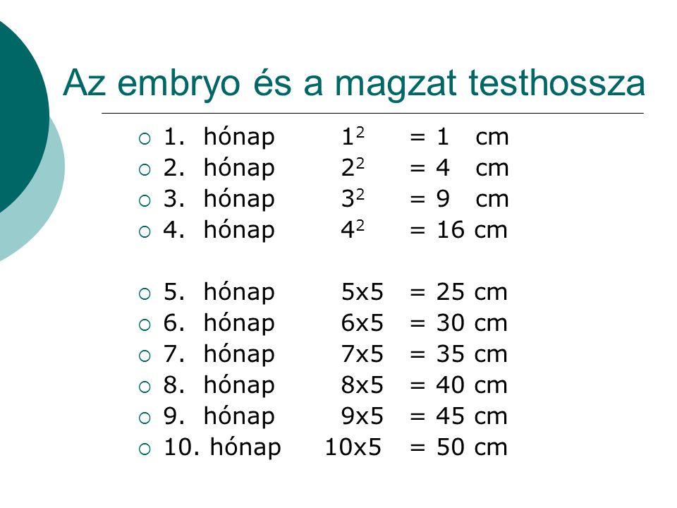 Az embryo és a magzat testhossza  1. hónap1 2 = 1 cm  2. hónap 2 2 = 4 cm  3. hónap 3 2 = 9 cm  4. hónap 4 2 = 16 cm  5. hónap 5x5= 25 cm  6. hó
