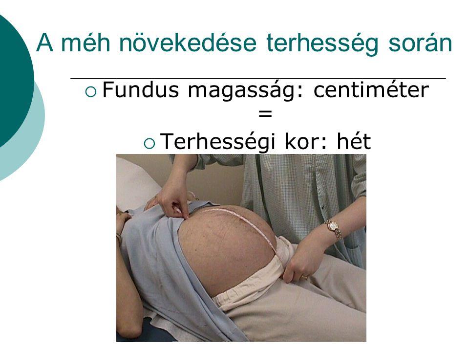 A méh növekedése terhesség során  Fundus magasság: centiméter =  Terhességi kor: hét