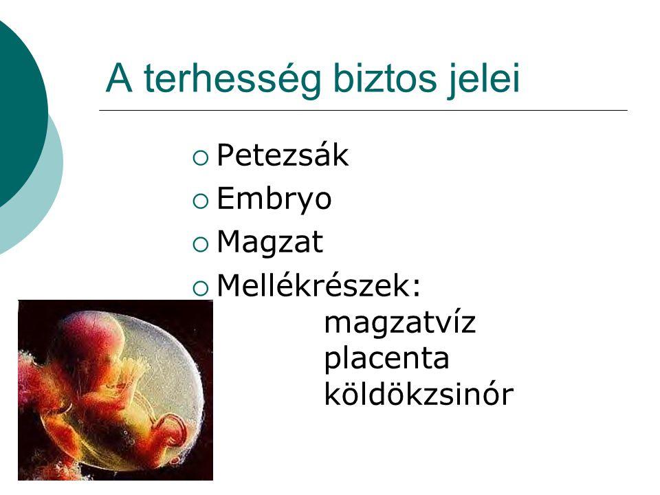 A terhesség biztos jelei  Petezsák  Embryo  Magzat  Mellékrészek: magzatvíz placenta köldökzsinór