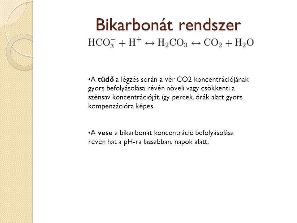 Bikarbonát rendszer • A tüdő a légzés során a vér CO2 koncentrációjának gyors befolyásolása révén növeli vagy csökkenti a szénsav koncentrációját, így