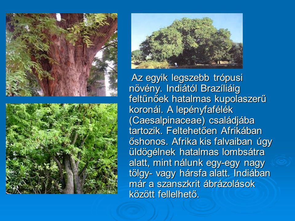Az egyik legszebb trópusi növény. Indiától Brazíliáig feltűnőek hatalmas kupolaszerű koronái. A lepényfafélék (Caesalpinaceae) családjába tartozik. Fe