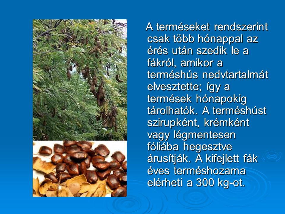 A terméseket rendszerint csak több hónappal az érés után szedik le a fákról, amikor a terméshús nedvtartalmát elvesztette; így a termések hónapokig tá