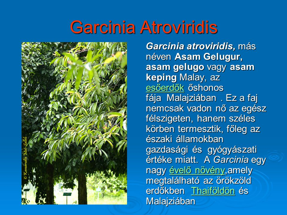 Garcinia Atroviridis Garcinia atroviridis, más néven Asam Gelugur, asam gelugo vagy asam keping Malay, az esőerdők őshonos fája Malajziában. Ez a faj
