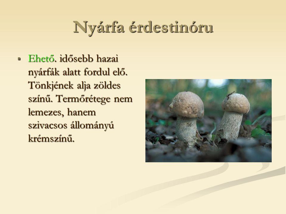 Nyárfa érdestinóru  Ehető. idősebb hazai nyárfák alatt fordul elő. Tönkjének alja zöldes színű. Termőrétege nem lemezes, hanem szivacsos állományú kr