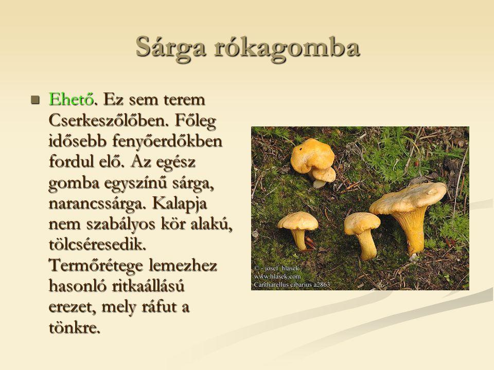 Sárga rókagomba  Ehető. Ez sem terem Cserkeszőlőben. Főleg idősebb fenyőerdőkben fordul elő. Az egész gomba egyszínű sárga, narancssárga. Kalapja nem
