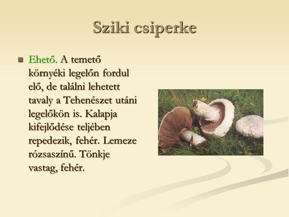Sziki csiperke  Ehető. A temető környéki legelőn fordul elő, de találni lehetett tavaly a Tehenészet utáni legelőkön is. Kalapja kifejlődése teljében