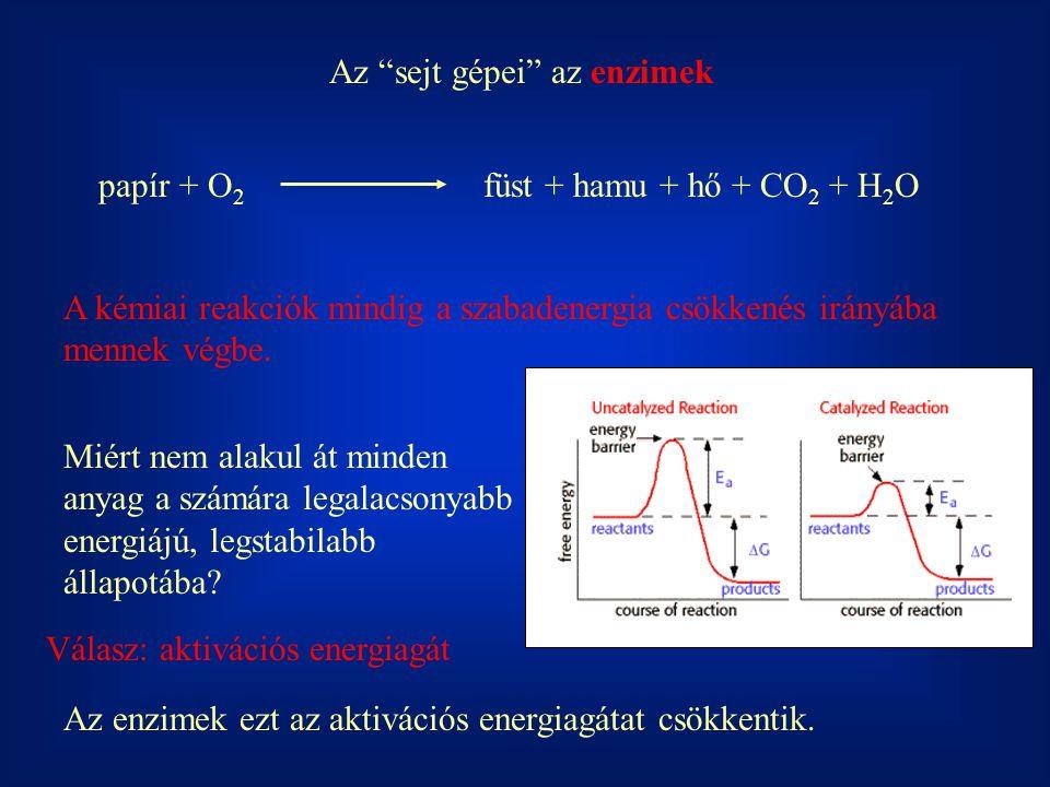 Lineweaver-Burk féle linearizált ábrázolásmód v = v m [S]/(K M +[S]) 1/v = ([S] + K M )/v m [S] 1/v = [S]/v m [S] + K M /v m [S] 1/v = 1/v m + 1/[S] * K M /v m 1/S 1/v tg  = K M /v m 1/v m