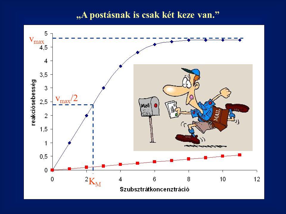 """v max KMKM v max /2 Nem katalizált reakció """"A postásnak is csak két keze van."""