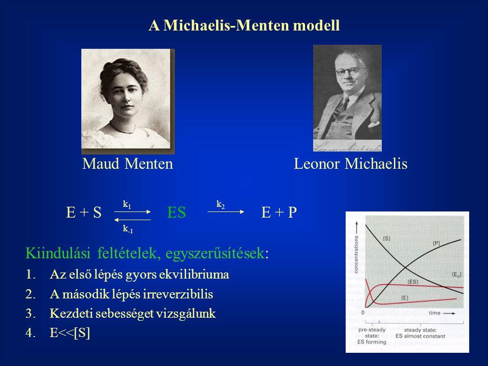 A Michaelis-Menten modell Maud MentenLeonor Michaelis E + S ES E + P k1k1 k2k2 k -1 Kiindulási feltételek, egyszerűsítések: 1.Az első lépés gyors ekvilibriuma 2.A második lépés irreverzibilis 3.Kezdeti sebességet vizsgálunk 4.E<<[S]