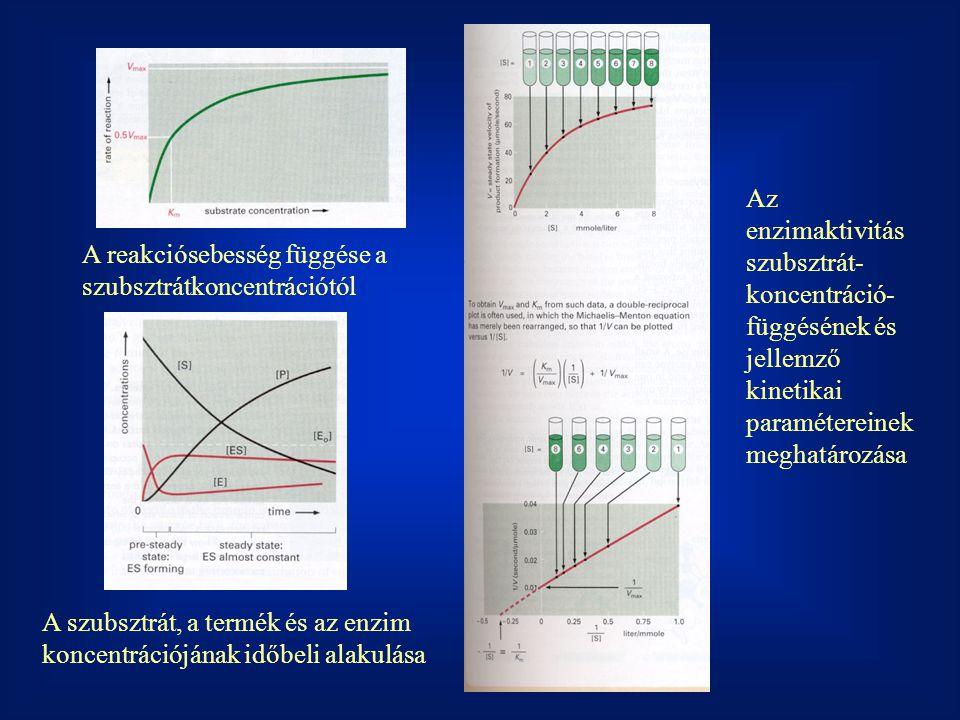 A reakciósebesség függése a szubsztrátkoncentrációtól A szubsztrát, a termék és az enzim koncentrációjának időbeli alakulása Az enzimaktivitás szubsztrát- koncentráció- függésének és jellemző kinetikai paramétereinek meghatározása