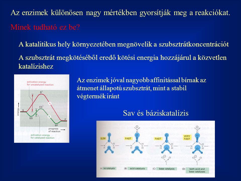 """Enzimtulajdonságok Csak termodinamikailag lehetséges reakciót katalizálnak Mivel """"csak az aktivációs energiát csökkentik: Biokatalizátorok"""