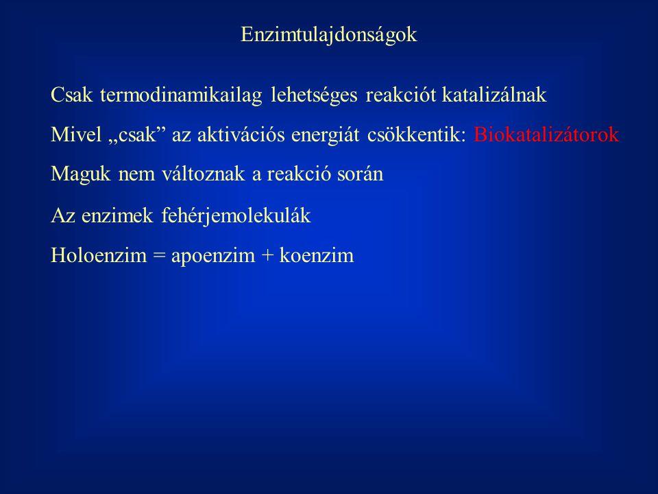 ES fogyás = ES képződés k -1  ES  + k 2  ES  = k 1  E  S   E  =  E O  -  ES   ES  =  E  S  * k 1 /(k -1 + k 2 ) = (  E O  -  ES  )  S  * k 1 /(k -1 + k 2 ) K m = (k -1 + k 2 )/ k 1  ES  = (  E O  -  ES  )  S  * 1/ K m  ES  K m +  ES   S  =  E O   S   ES  =  E O   S  / (K m +  S  )v = k 2  ES  v = k 2  E O   S  / (K m +  S  )v = v max = k 2  E O  v = v max  S  / (K m +  S  ) E + S ES E + P k1k1 k2k2 k -1
