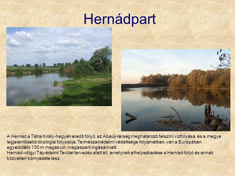 Hernádpart A Hernád a Tátra Király-hegyén eredő folyó, az Abaúji-térség meghatározó felszíni vízfolyása, és a megye legjelentősebb ökológiai folyosója