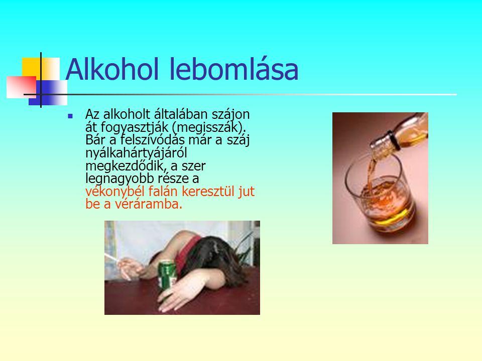 Alkohol lebomlása  Az alkoholt általában szájon át fogyasztják (megisszák). Bár a felszívódás már a száj nyálkahártyájáról megkezdődik, a szer legnag