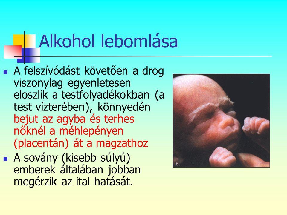 Alkohol lebomlása  A felszívódást követően a drog viszonylag egyenletesen eloszlik a testfolyadékokban (a test vízterében), könnyedén bejut az agyba
