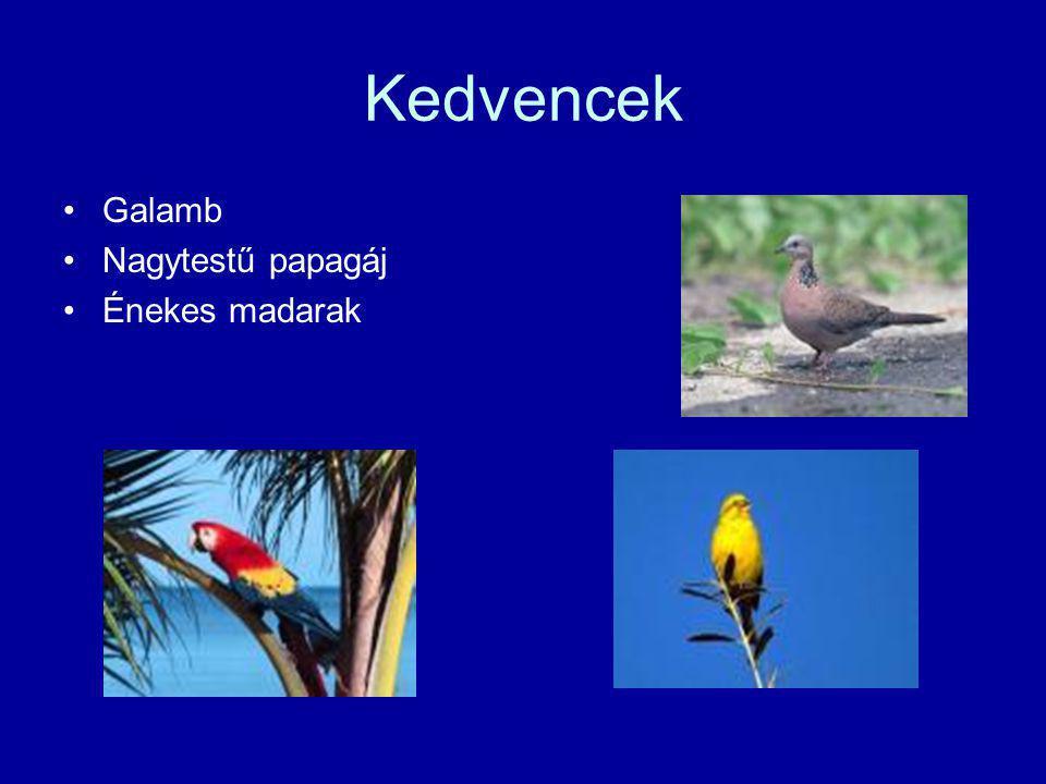 Kedvencek •Galamb •Nagytestű papagáj •Énekes madarak