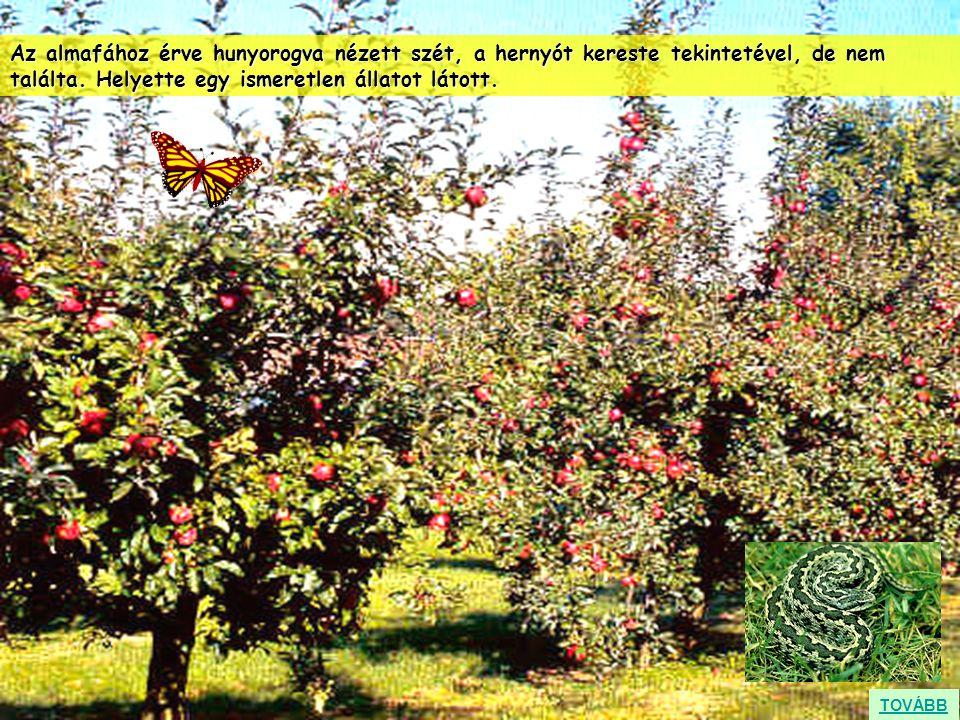 Az almafához érve hunyorogva nézett szét, a hernyót kereste tekintetével, de nem találta. Helyette egy ismeretlen állatot látott. TOVÁBB
