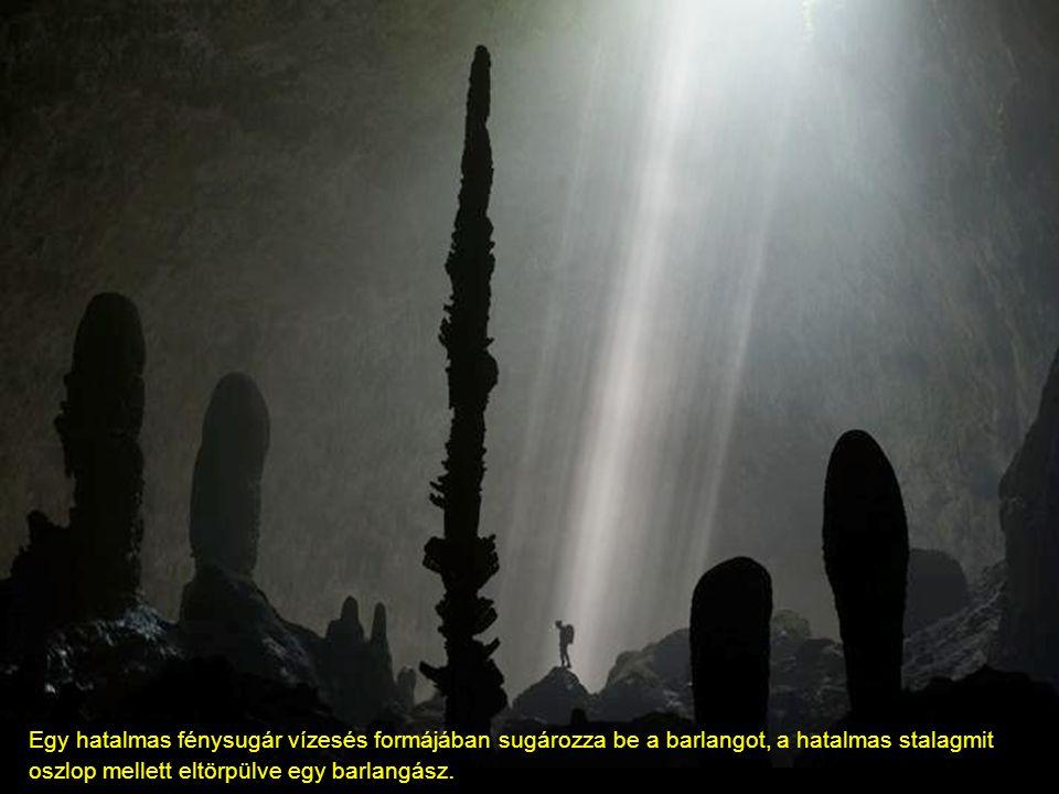 A barlang hossza 6 kilométer Összefüggö kürtők és a mini őserdő 400 méterre a föld alatt