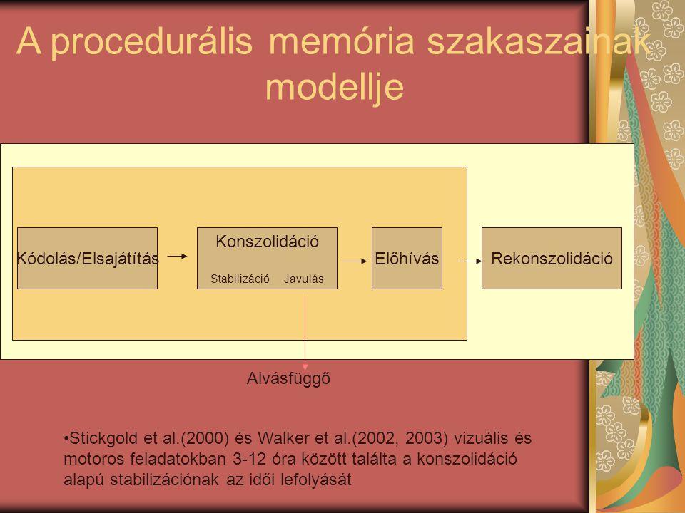 Alvásfüggő Kódolás/Elsajátítás Konszolidáció Stabilizáció Javulás ElőhívásRekonszolidáció A procedurális memória szakaszainak modellje •Stickgold et al.(2000) és Walker et al.(2002, 2003) vizuális és motoros feladatokban 3-12 óra között találta a konszolidáció alapú stabilizációnak az idői lefolyását