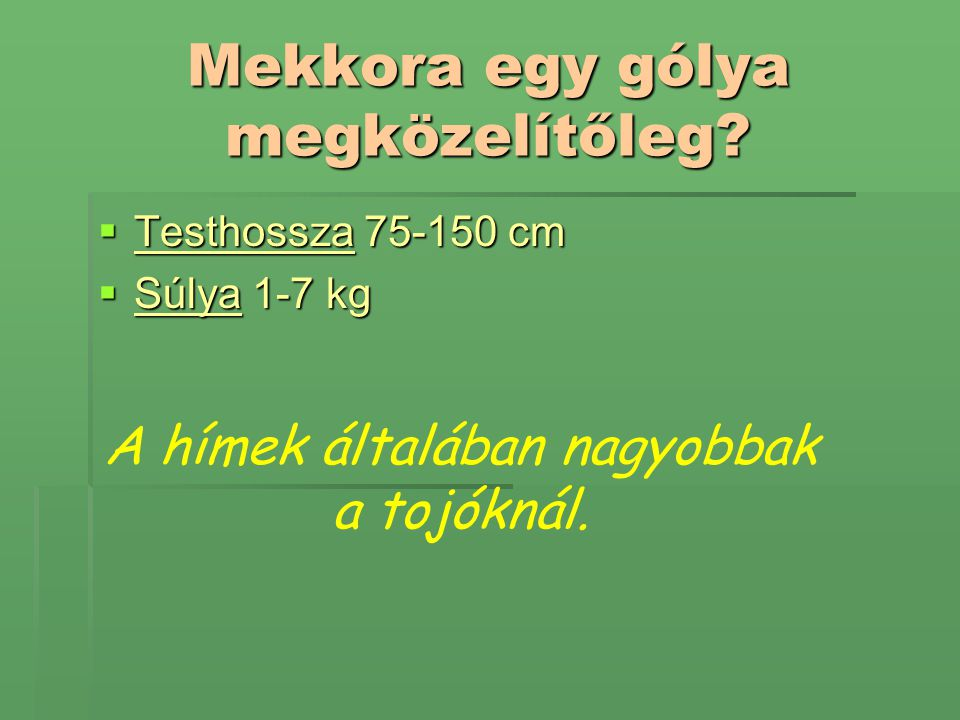Mekkora egy gólya megközelítőleg?  Testhossza 75-150 cm  Súlya 1-7 kg A hímek általában nagyobbak a tojóknál.
