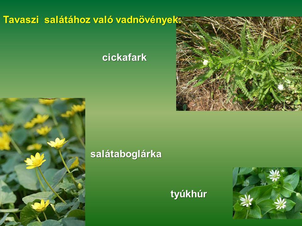 Tavaszi salátához való vadnövények: cickafark salátaboglárka tyúkhúr