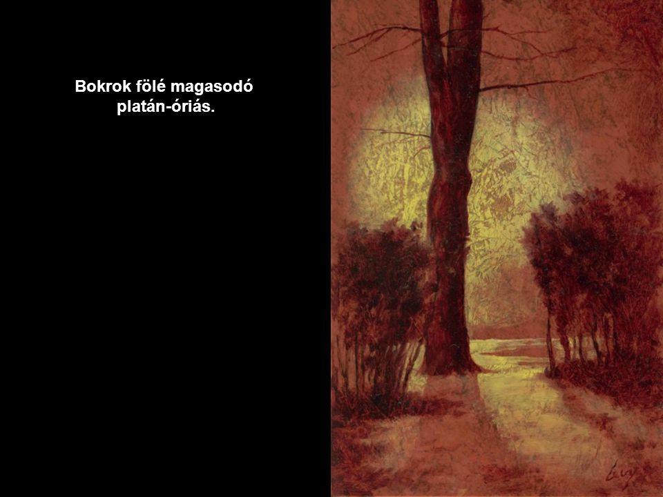 Téli fák törzsei lámpafényes estékben állnak. A fenyves sűrűje álomba merült.