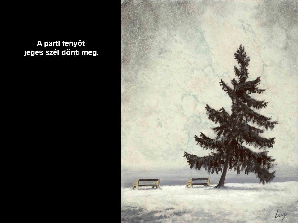 Térdig érő hóban, erdei úton haladunk tovább.