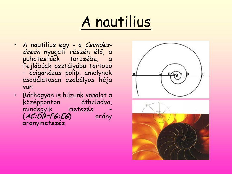 A nautilius •A•A nautilius egy - a Csendes- óceán nyugati részén élő, a puhatestűek törzsébe, a fejlábúak osztályába tartozó - csigaházas polip, amely