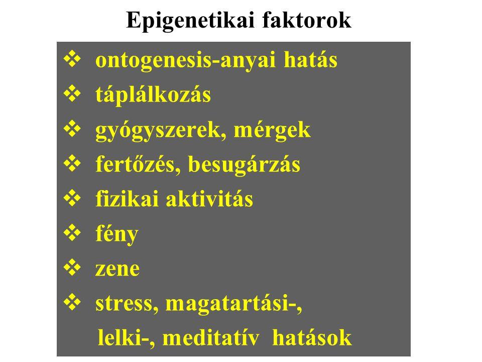 Epigenetikai faktorok  ontogenesis-anyai hatás  táplálkozás  gyógyszerek, mérgek  fertőzés, besugárzás  fizikai aktivitás  fény  zene  stress,