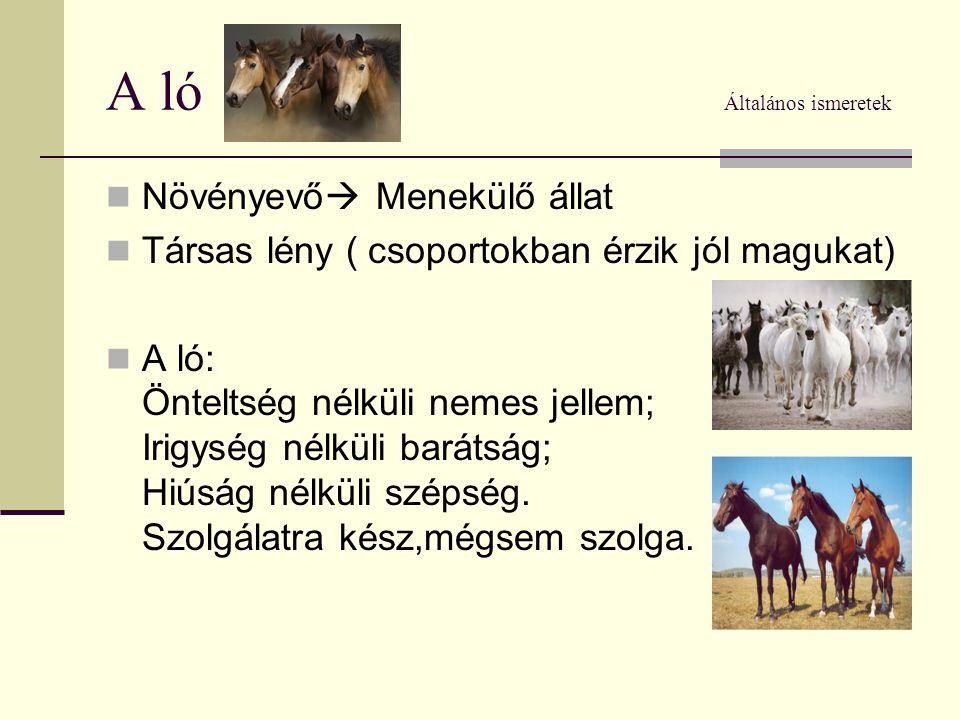 A ló Általános ismeretek  Növényevő  Menekülő állat  Társas lény ( csoportokban érzik jól magukat)  A ló: Önteltség nélküli nemes jellem; Irigység