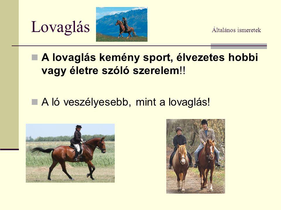Lovaglás Általános ismeretek  A lovaglás kemény sport, élvezetes hobbi vagy életre szóló szerelem!!  A ló veszélyesebb, mint a lovaglás!