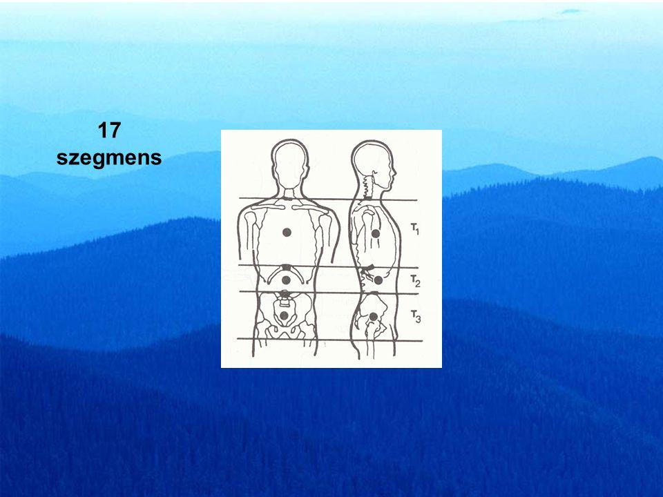 Hanavan testmodel 15 szegmens