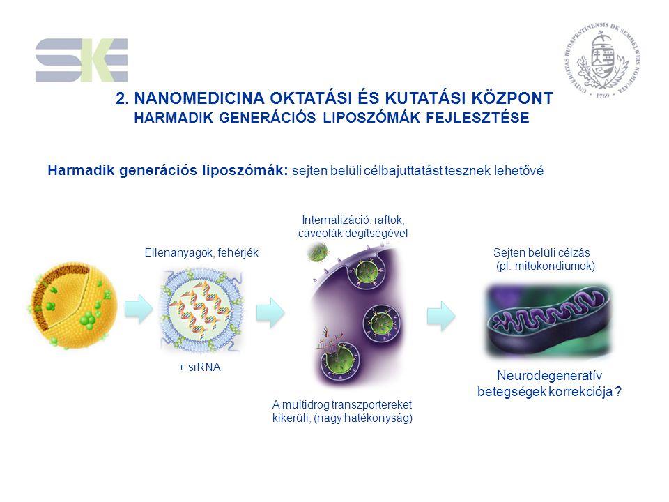Ellenanyagok, fehérjék Sejten belüli célzás (pl. mitokondiumok) Internalizáció: raftok, caveolák degítségével + siRNA Neurodegeneratív betegségek korr