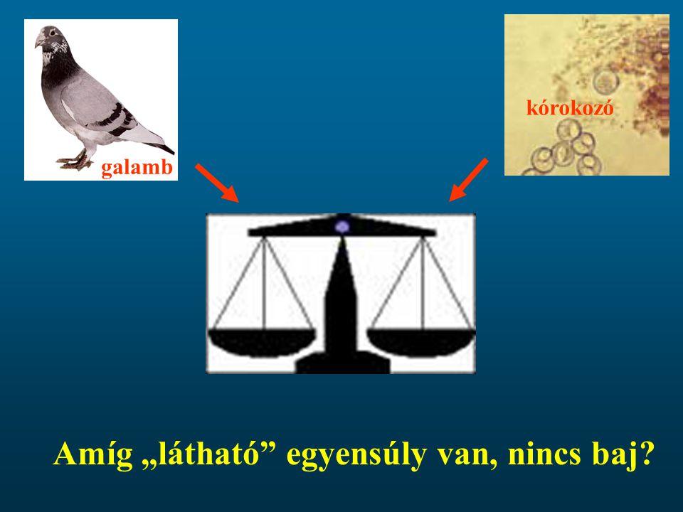 """galamb kórokozó Amíg """"látható"""" egyensúly van, nincs baj?"""