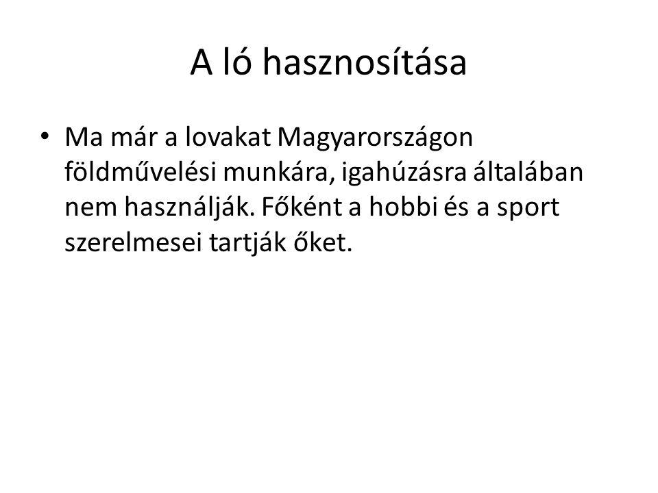 A ló hasznosítása • Ma már a lovakat Magyarországon földművelési munkára, igahúzásra általában nem használják. Főként a hobbi és a sport szerelmesei t