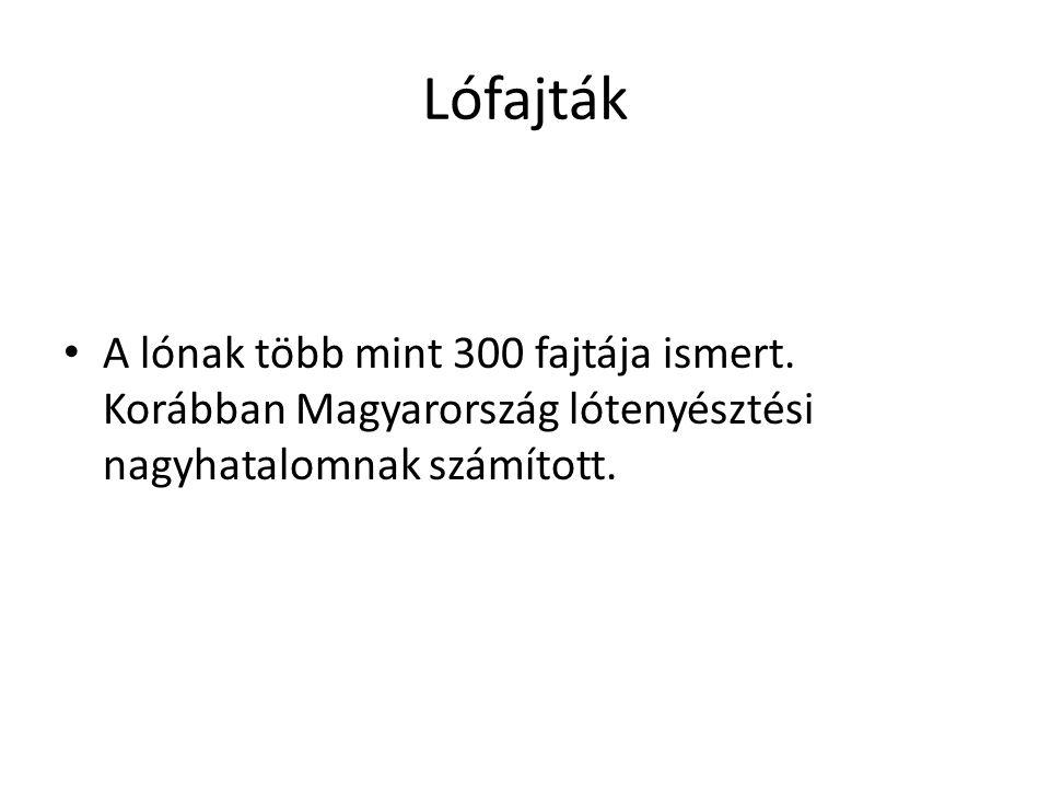 Lófajták • A lónak több mint 300 fajtája ismert. Korábban Magyarország lótenyésztési nagyhatalomnak számított.