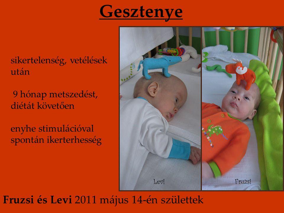 Gesztenye sikertelenség, vetélések után 9 hónap metszedést, diétát követően enyhe stimulációval spontán ikerterhesség Fruzsi és Levi 2011 május 14-én születtek