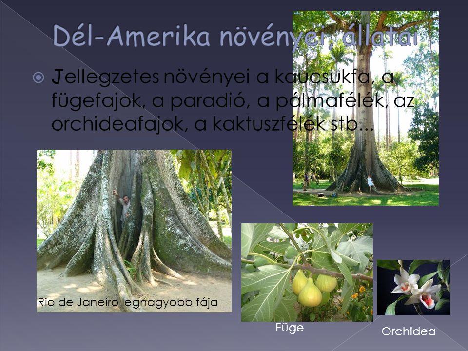  J ellegzetes növényei a kaucsukfa, a fügefajok, a paradió, a pálmafélék, az orchideafajok, a kaktuszfélék stb... Rio de Janeiro legnagyobb fája Orch